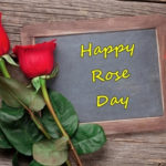 Happy Rose Day 2017 Wishes: Greetings, Images, Wallpaper, Shayari for Your Loved Ones