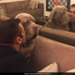 Salman Khan To Priyanka Chopra, Stars And Their Equally A-List Pets
