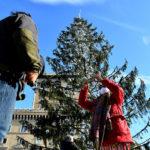 Rome Launches Investigation into Christmas Tree's Premature Death