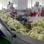 Secret Sauce? North Korean dictator Kim Jong Un applies science to kimchi-making
