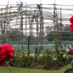 Many varieties will bloom only after Rose Festival, admits MC horticulture wing